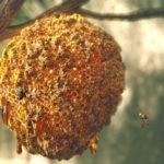 javier-perez-jperez-bees-hd-1-150x150.jp