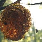 javier-perez-jperez-bees-hd-2-150x150.jp