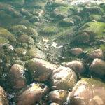 javier-perez-pebbles-6-150x150.jpg